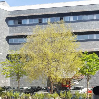 UPM: Novel III-Sb quantum materials for photovoltaics (Spain)